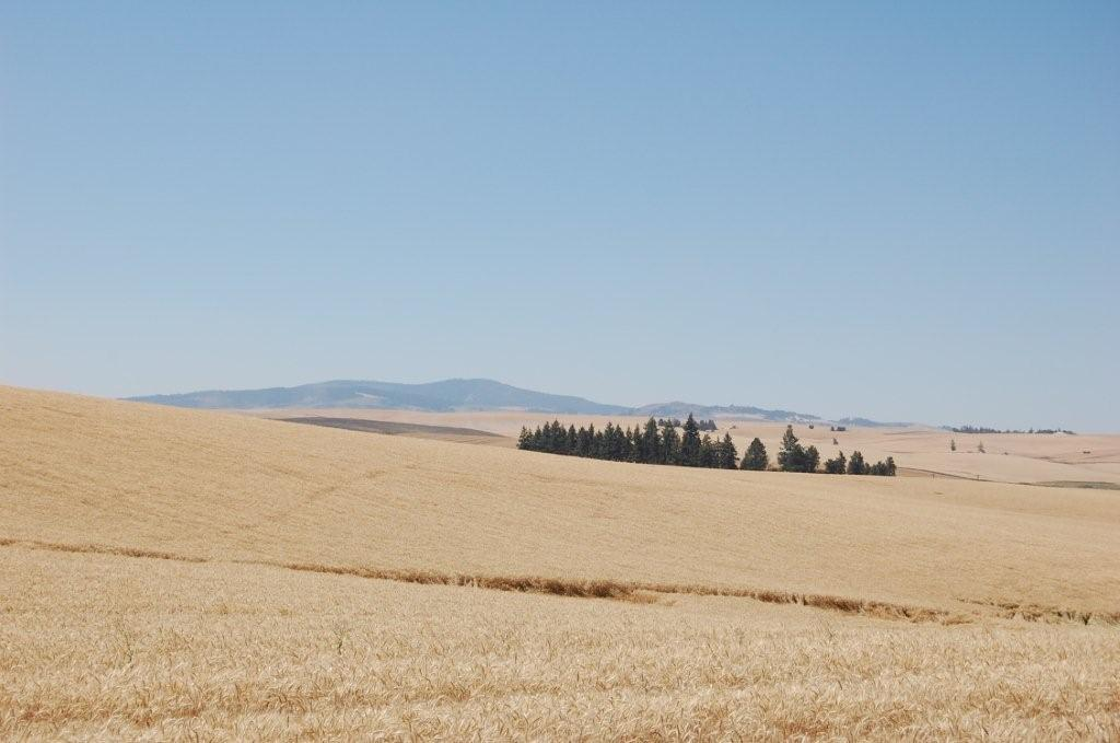 Central Idaho Farm and Cropland