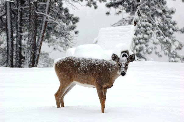 bobs-deer-pic-2