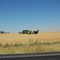 Camas Prairie Wheat Harvest